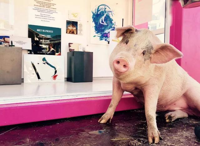 Swatch新出的限量款手表,设计师是一头猪!
